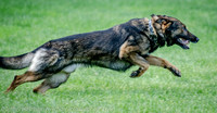 News K9 Competition-4779