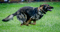 News K9 Competition-4760