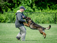 News K9 Competition-4790