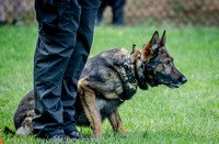 News K9 Competition-4757