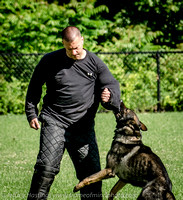 News K9 Competition-4826