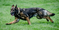 News K9 Competition-4773