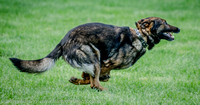News K9 Competition-4766